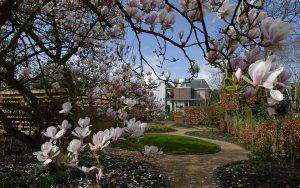 magnolia Vincent van Gogh